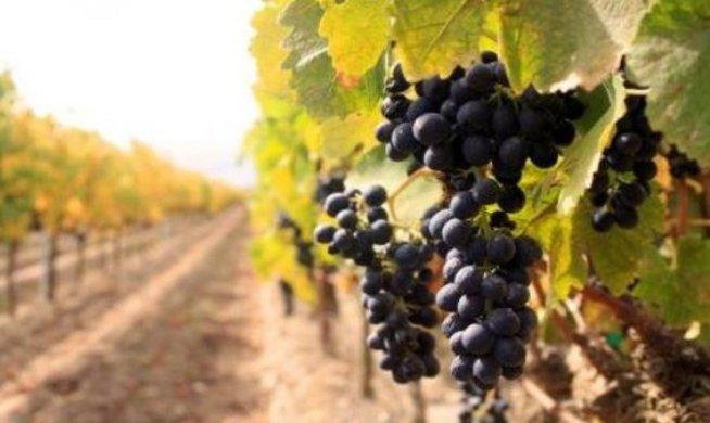 Το γαλλικό κρασί έχει αρχαίες ρίζες