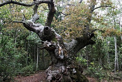 Το «Δάσος των Τρολ» στη Σουηδία