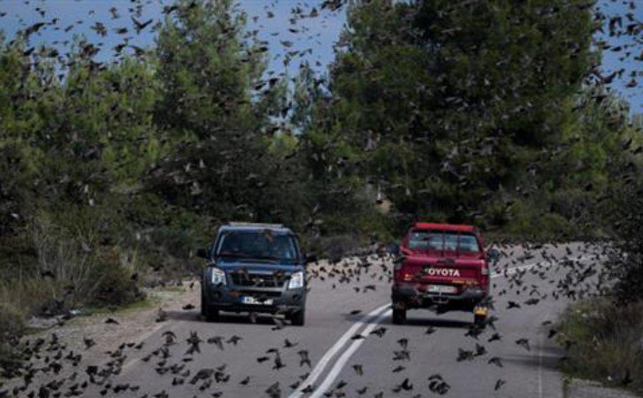 Σμήνος πουλιών πέταξε χαμηλά και προκάλεσε τροχαίο στη Λαμία